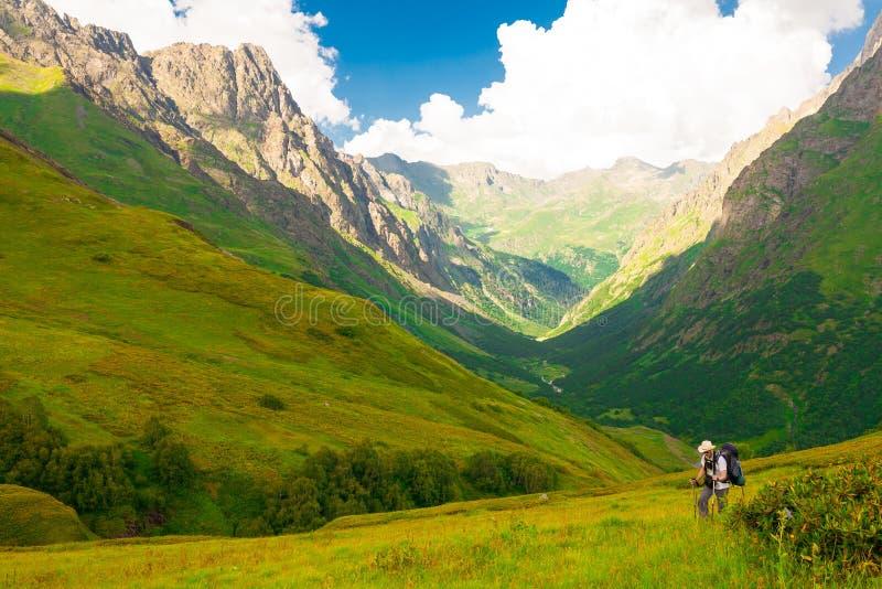 Лето горы день солнечный Зеленые лес и луг стоковые изображения rf