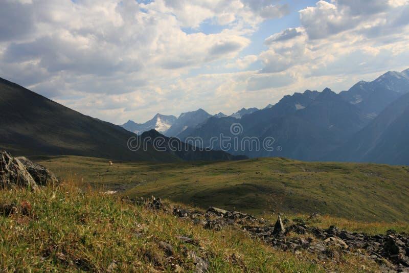 лето горы altai стоковое изображение rf