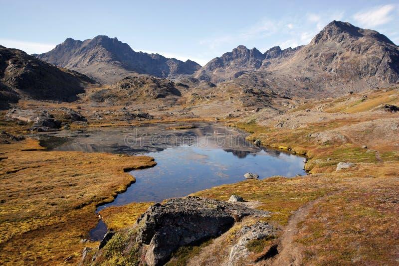 лето Гренландии стоковые изображения rf