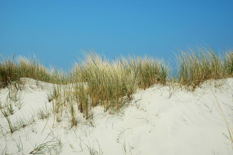 лето дюн стоковое изображение