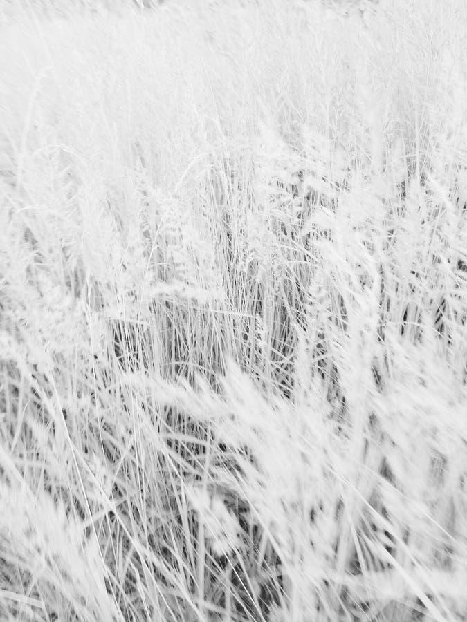 Лето засаживает солнечное деревни белое темное стоковое изображение rf