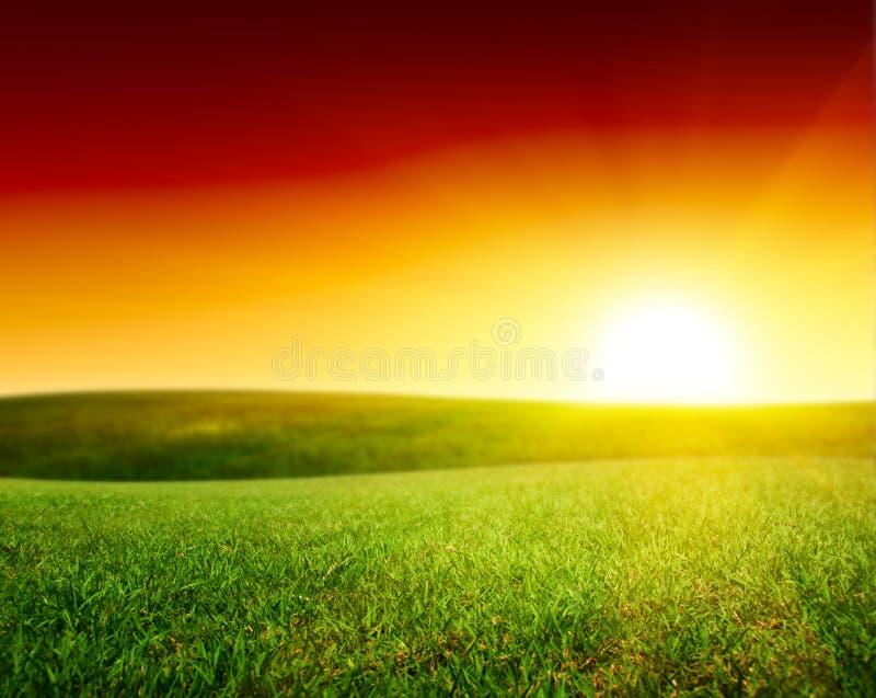 лето зеленого цвета травы поля стоковое изображение rf