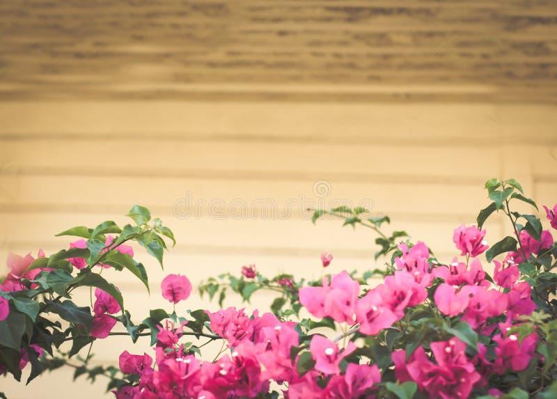 Лето искусства цветет предпосылка рамки Розовые цветки на серых деревянных досках стоковые изображения