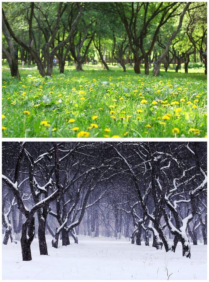 Лето и зима стоковая фотография