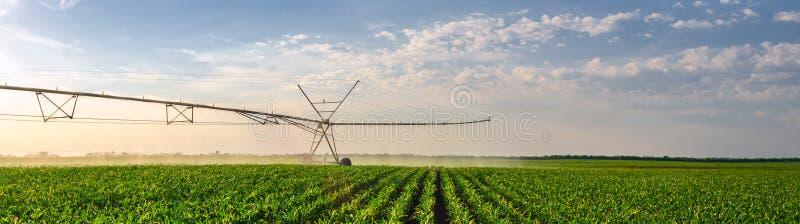 Лето кукурузного поля аграрной оросительной системы моча солнечное стоковая фотография