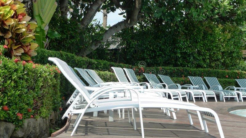 Лето, курортный отель, бассейн, кресла для отдыха, тропическая атмосфера, стоковое изображение rf