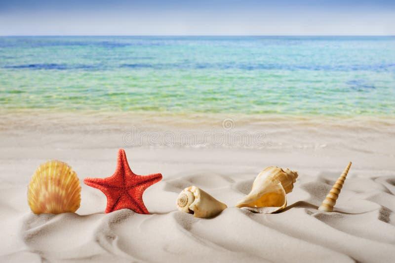Лето, морская звёзда на песке стоковые фотографии rf