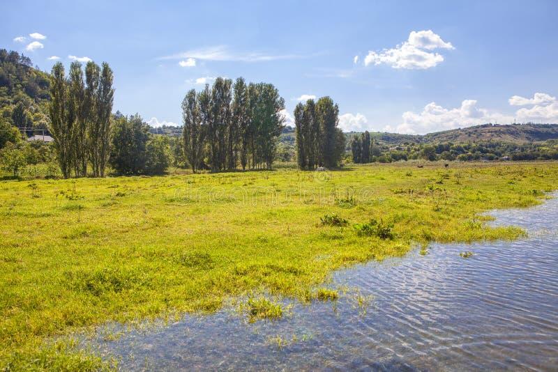 Лето на береге реки стоковое изображение