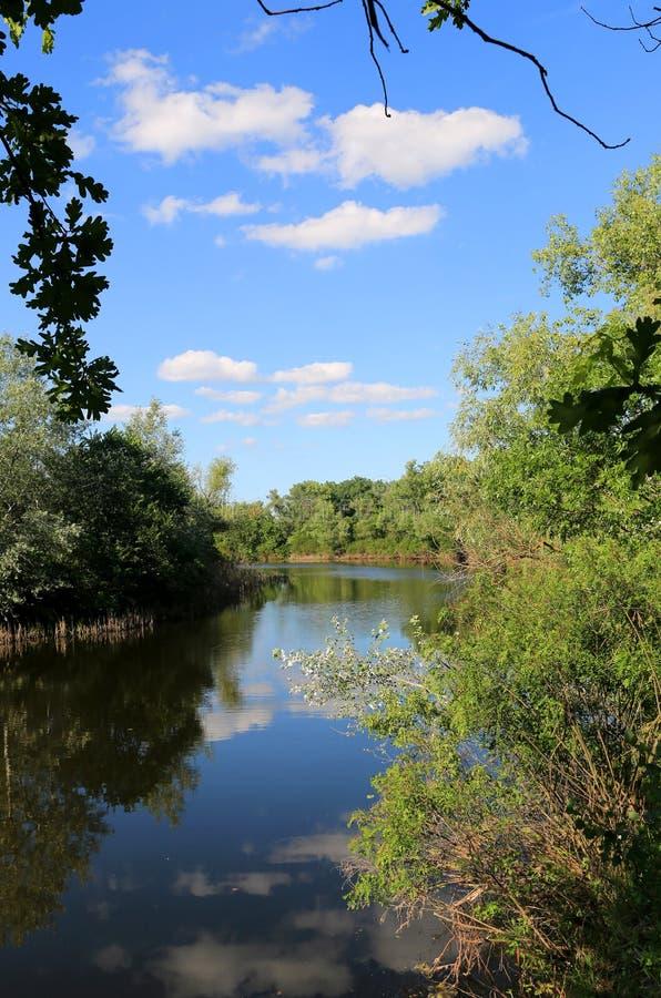 Лето на реке стоковое изображение rf