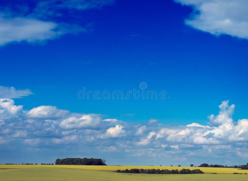 лето неба поля стоковые фотографии rf