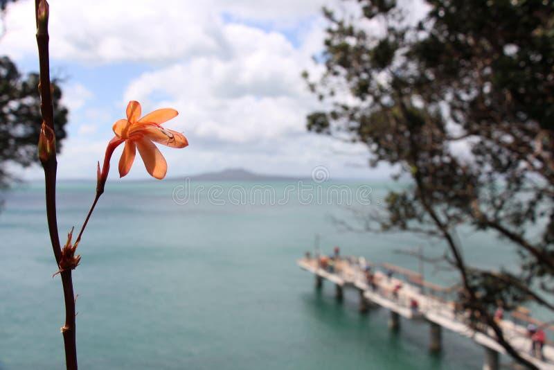 Лето Новой Зеландии стоковые изображения rf