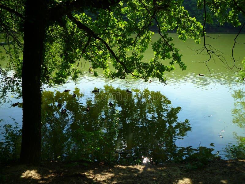 лето озера дня стоковое фото rf