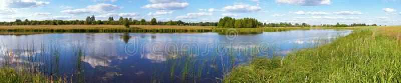 лето панорамы озера rushy стоковое изображение rf