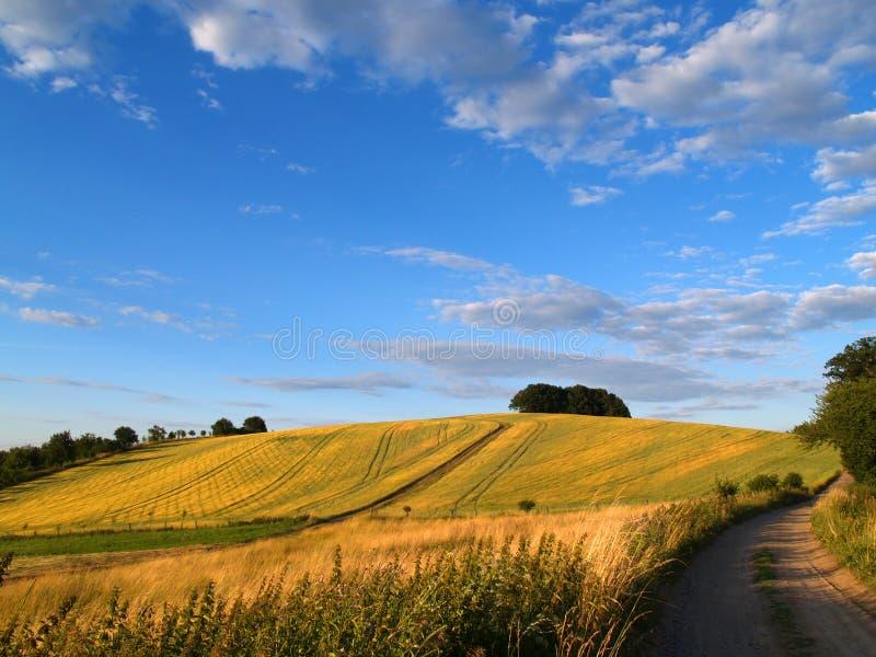 лето поля стоковая фотография rf