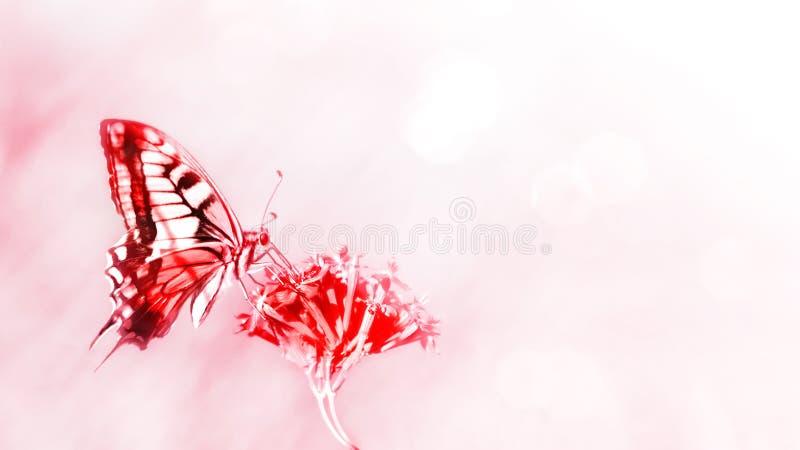 лето предпосылки естественное Красная бабочка на красных цветках стоковые фото