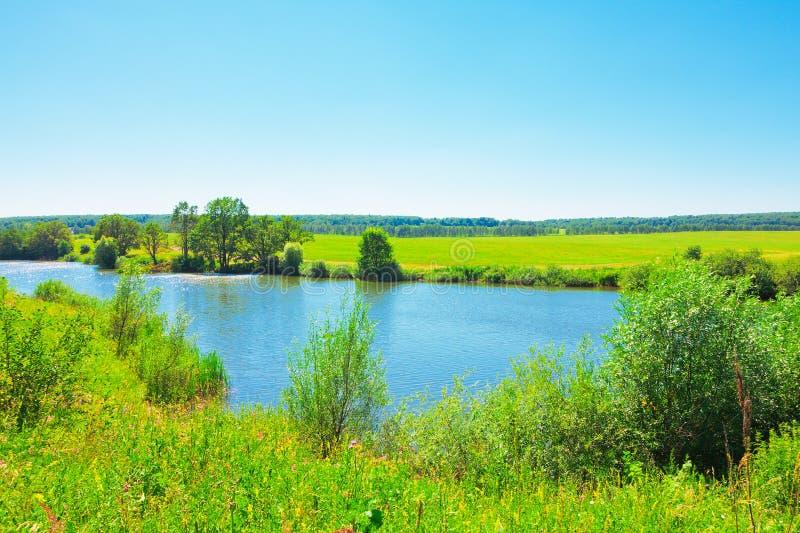 лето пруда ландшафта стоковое фото rf