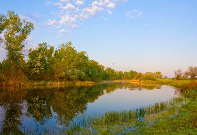 лето реки утра стоковое фото