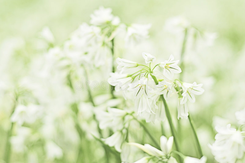 лето снежинки цветка стоковые фотографии rf