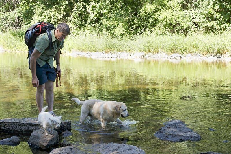 лето собаки дней стоковая фотография