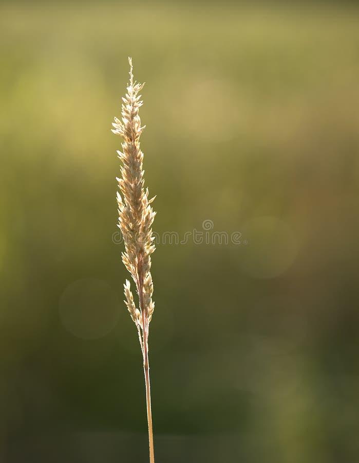 лето травы Стоковые Изображения