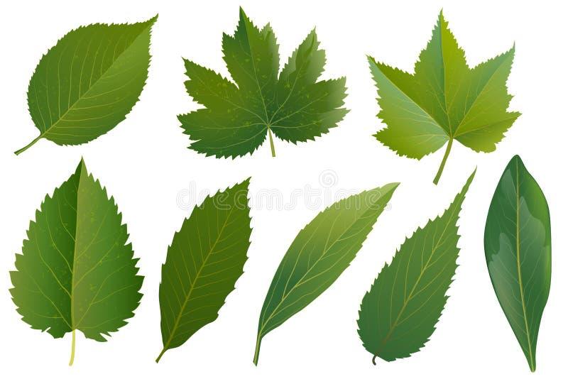 Лето, установленные листья весны Зеленый плоский значок Вектор, изолированный дальше иллюстрация штока