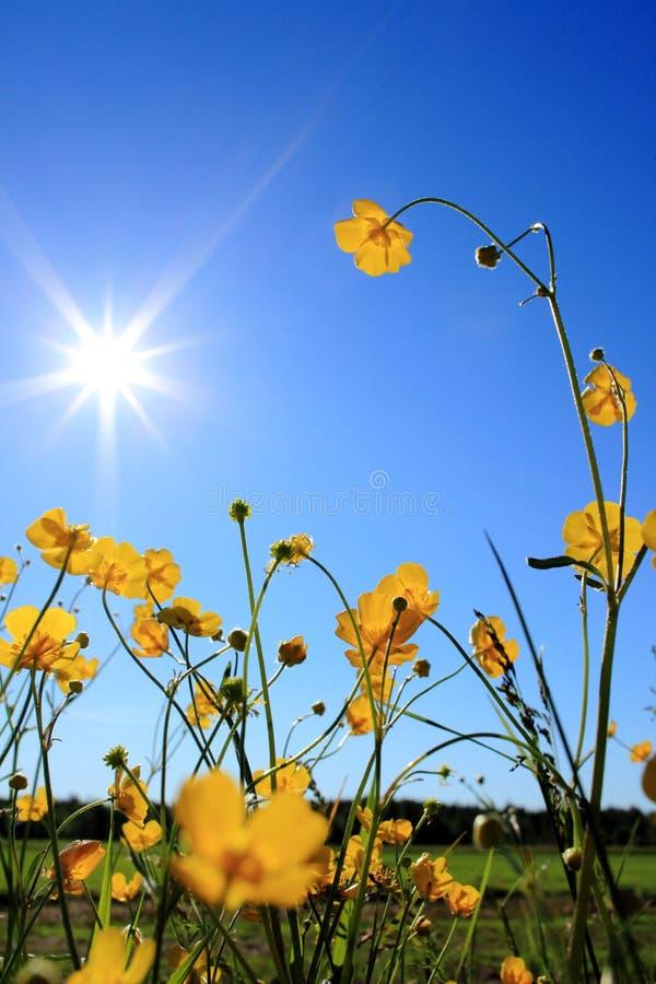 Download лето стоковое изображение. изображение насчитывающей цветок - 18377473