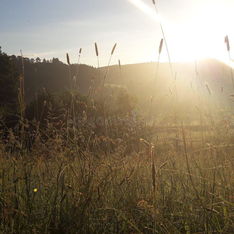 Лето стоковая фотография rf