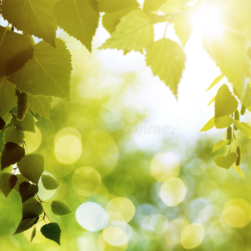 Download Лето Forrest стоковое изображение. изображение насчитывающей backhoe - 40591463