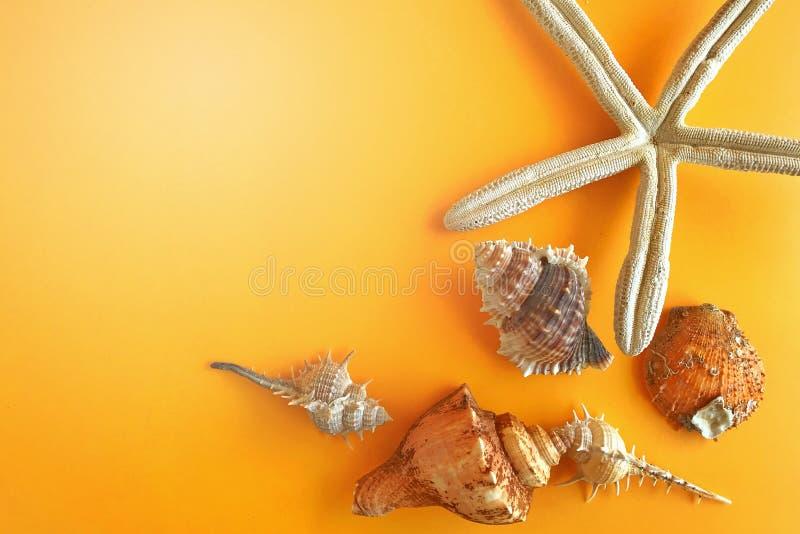 лето seashells песка рамки принципиальной схемы предпосылки Морские звёзды и seashells на предпосылке цвета стоковое фото rf
