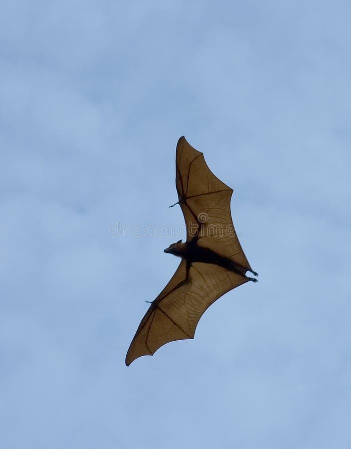 Download Летучая мышь стоковое фото. изображение насчитывающей вниз - 481074