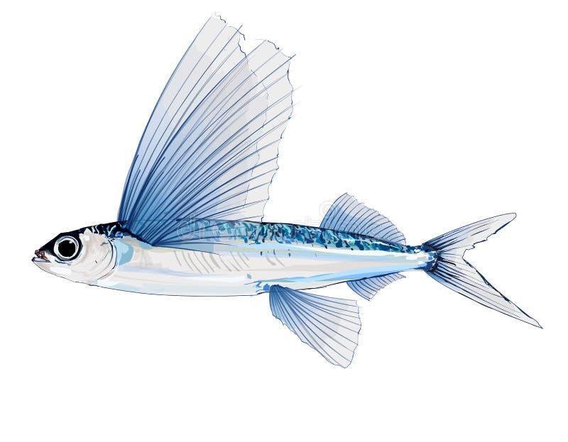 Летучая рыба в акварели иллюстрация штока
