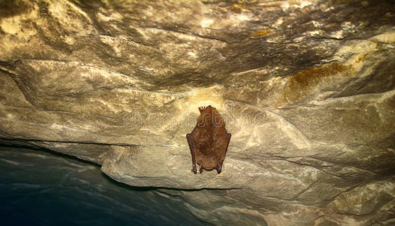 Летучие мыши как жителя пещер и подземелиь стоковая фотография