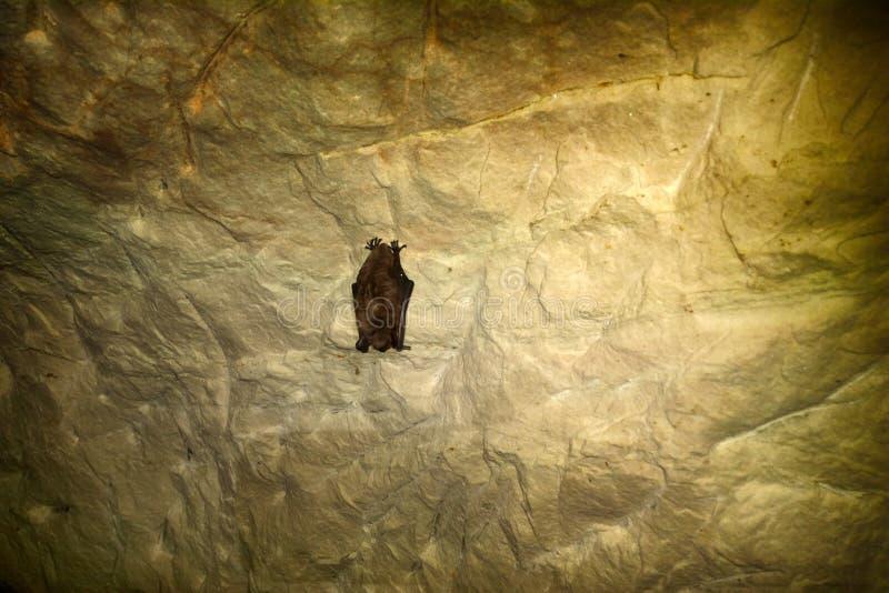 Летучие мыши как жителя пещер и подземелиь стоковое фото