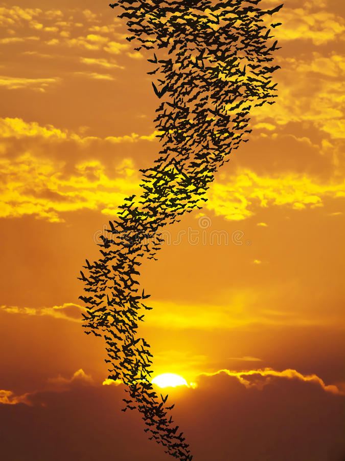 Летучие мыши летая солнце againt стоковая фотография rf