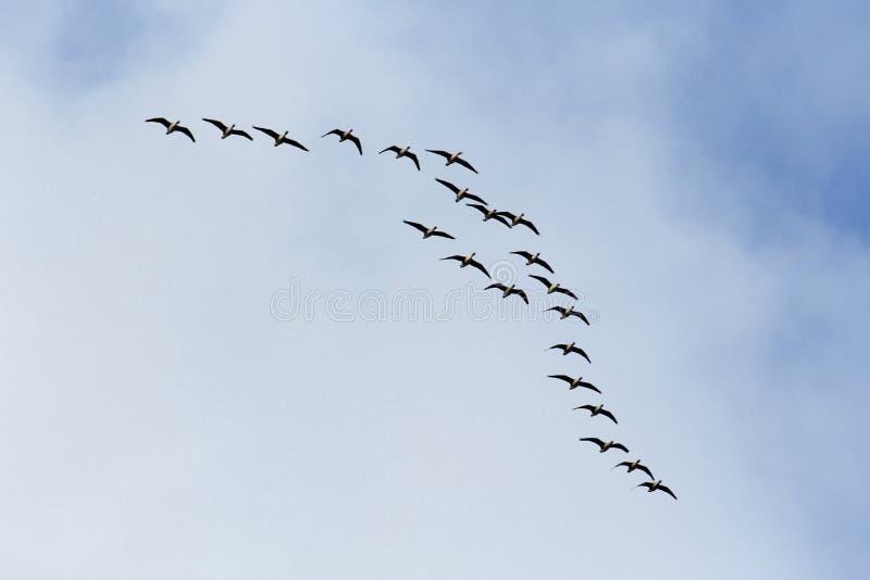 Летящие птицы в облачном небе стоковое изображение rf
