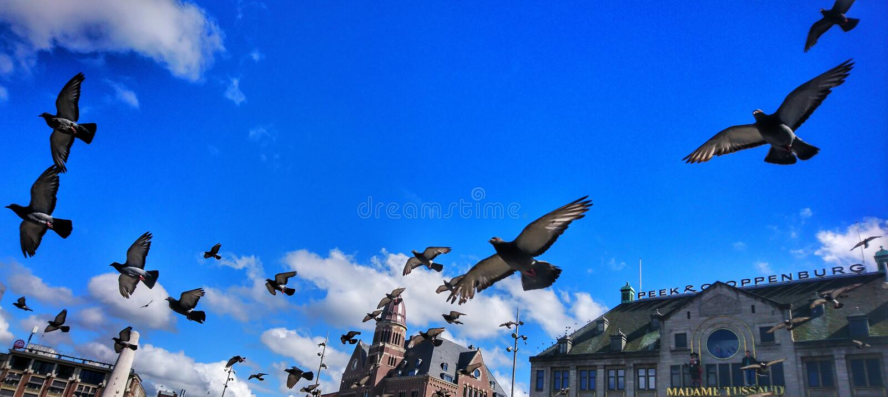 Летящие птицы стоковая фотография rf