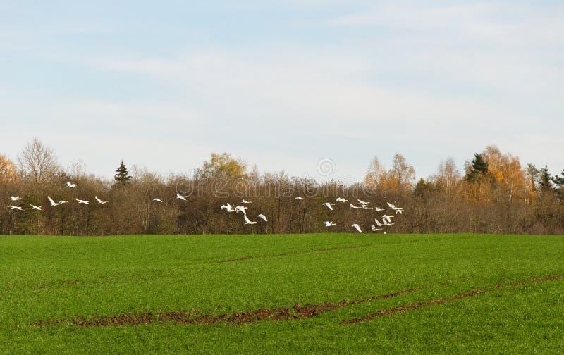 Летящие птицы стоковые фото