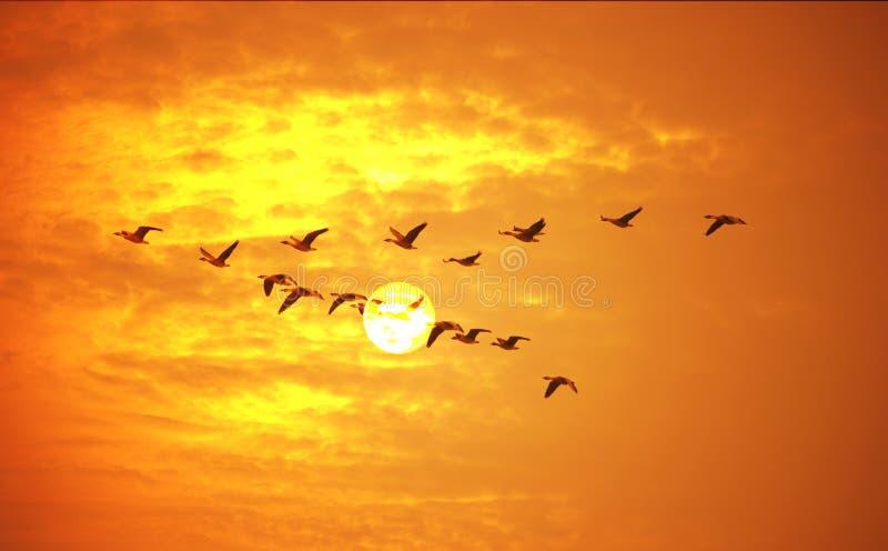 Летящие птицы иллюстрация вектора