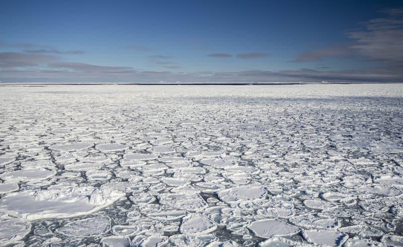 Лед блинчика на южном океане стоковое изображение rf