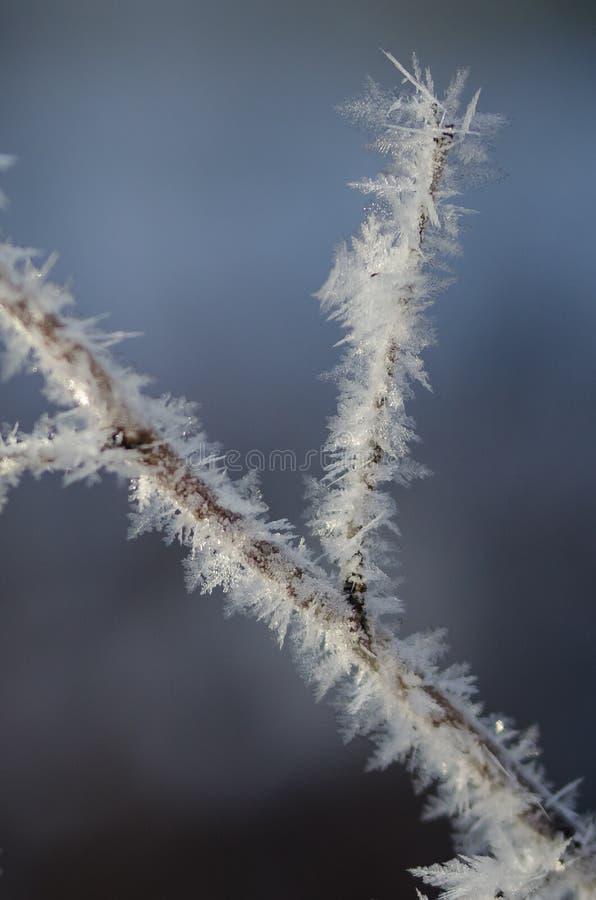 Ледистые кристаллы Frost льнуть к замороженной листве зимы стоковые изображения rf
