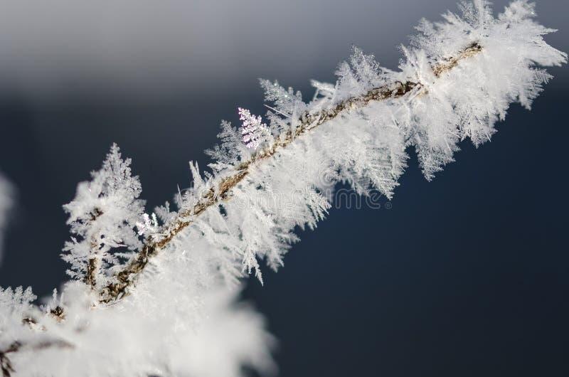 Ледистые кристаллы Frost льнуть к замороженной листве зимы стоковые фото