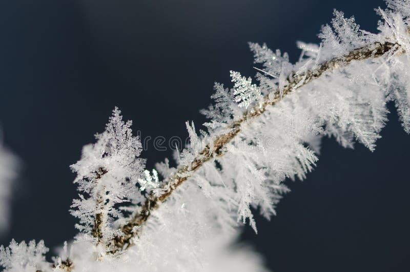 Ледистые кристаллы Frost льнуть к замороженной листве зимы стоковое фото
