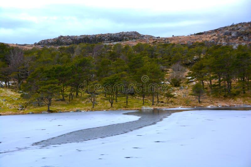 Лед покрыл озеро и деревья стоковая фотография rf