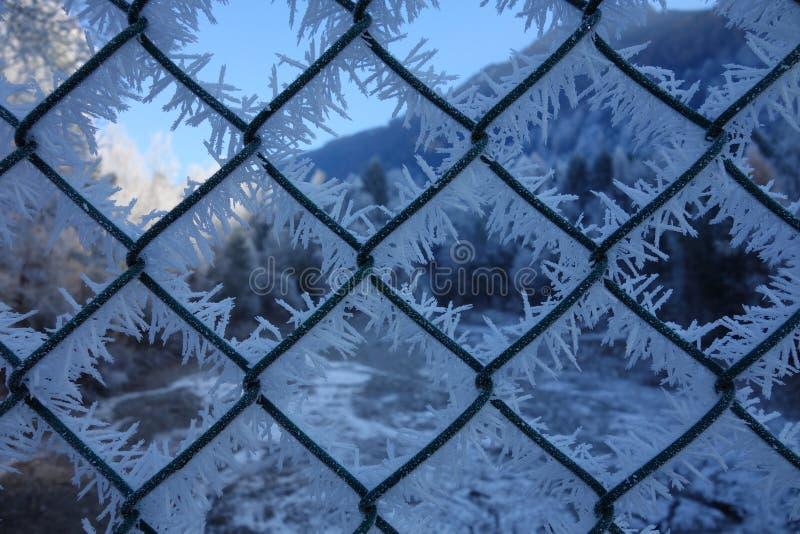 Ледяные кристаллы на загородке стоковые изображения