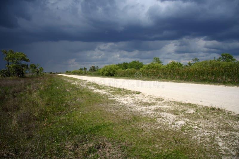 ливень болотистых низменностей стоковое изображение rf