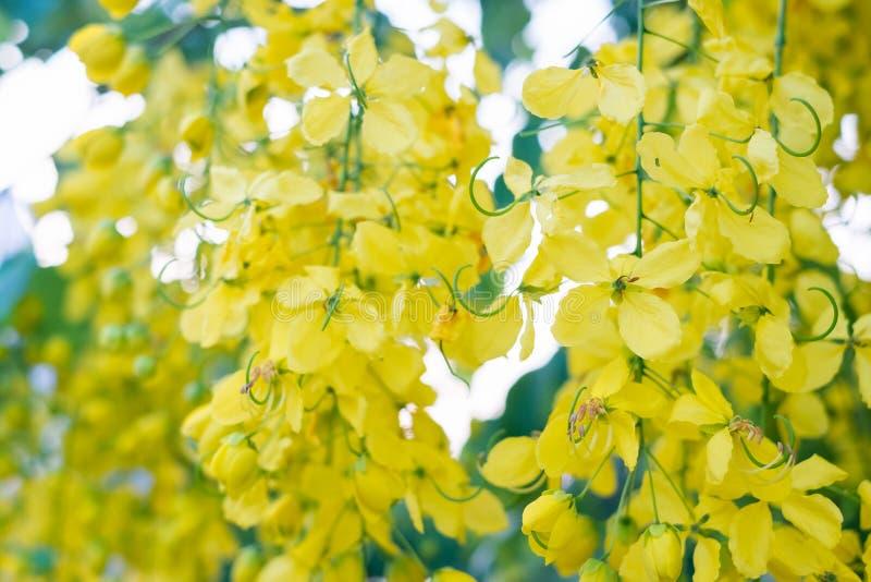 Ливень красивых цветков золотой стоковая фотография