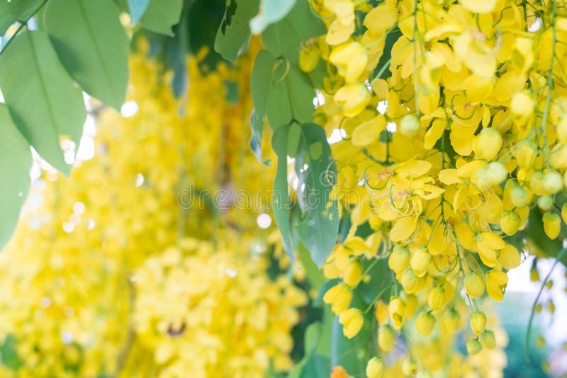 Ливень красивых цветков золотой стоковое изображение