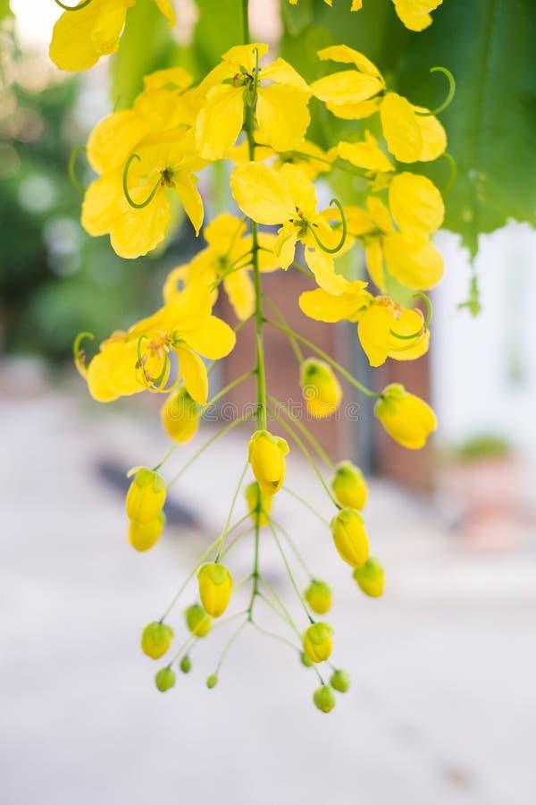 Ливень красивых цветков золотой стоковое изображение rf