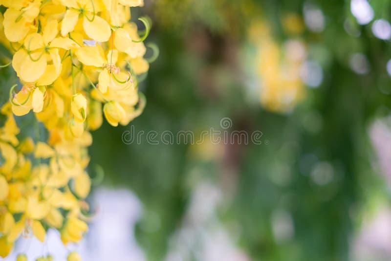 Ливень красивых цветков золотой стоковые изображения rf