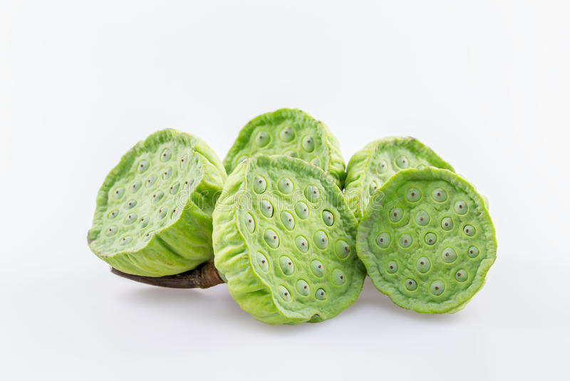Ливень семени лотоса и лотоса на белой предпосылке стоковые изображения rf